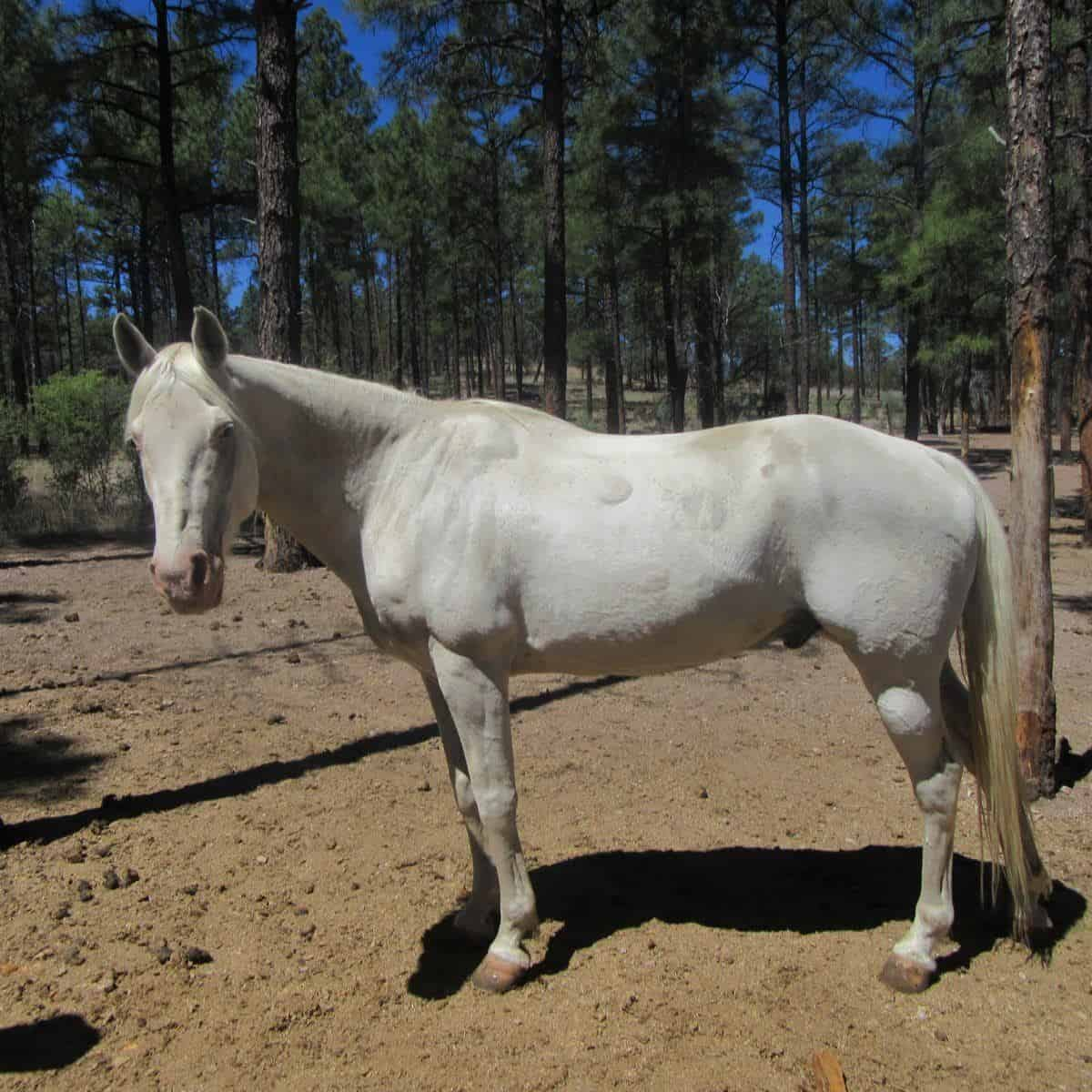 Casper, a horse at Geronimo Trail Guest Ranch