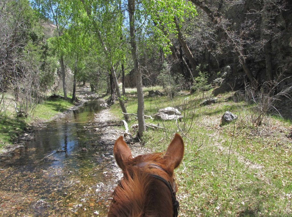 Wilderness, Geronimo Trail Guest Ranch, Horseback Riding, Trail Riding, New Mexico